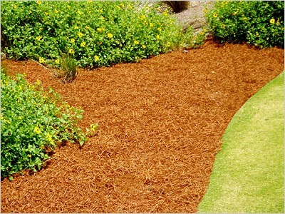 Soft-mulch gold orange